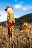 Épouvantails dans un domaine de maïs Photographie stock