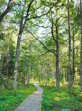 Épreuve dans les bois, été Image stock