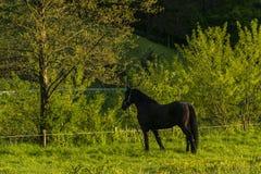 équestre Photo stock