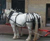 Équipe blanche de cheval de travail Photo libre de droits