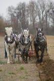 Équipe de charrue de trois chevaux Photo libre de droits