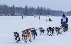 Équipe 2015 de chien d'Iditarod Image libre de droits