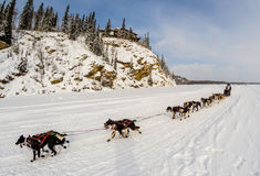 Équipe 2015 de chien d'Iditarod photos stock