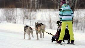 Équipe de chiens de traîneau avec des mushers clips vidéos