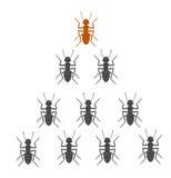 Équipe de fourmis Photo stock