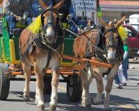 Équipe de mule Images libres de droits
