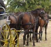 Équipe de quatre chevaux Images libres de droits
