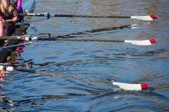 Équipe de rameurs s'exerçant pour la régate avec des avirons soulevés de l'eau Image libre de droits