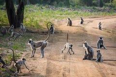 Équipe de singes sur la route Photographie stock libre de droits