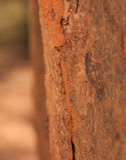 Équipe de termite Photos libres de droits