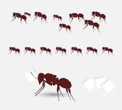 Équipe diligente de fourmis Photographie stock
