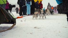 Équipe enrouée de chien au début de la course banque de vidéos