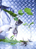 Équipement de chimie, laboratoire d'usines expérimental photos stock