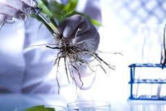 Équipement de chimie, laboratoire d'usines expérimental images libres de droits
