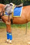 Équipement de polo Selle et étrier Image stock