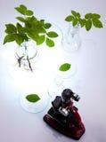Équipement de verrerie de laboratoire, installation d'essai photographie stock libre de droits