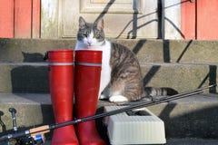 Équipements de pêche et un chat domestique Images libres de droits