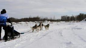 Équipes de chiens de traîneau avec des mushers banque de vidéos