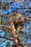 Équipez attacher un noeud sur un membre dans un arbre Photos libres de droits