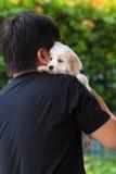 Équipez choyer le chiot maltais mignon sur son épaule Images stock
