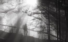 Équipez errer dans la forêt Images libres de droits
