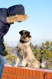 Équipez et son chien de schnauzer dehors en hiver Image libre de droits