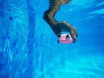 Équipez jouer avec le jouet en caoutchouc générique de poissons dans la piscine Photos stock