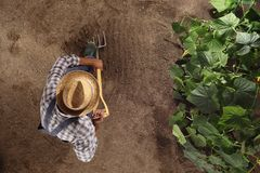 Équipez l'agriculteur travaillant avec la fourche dans le potager, creusez le s photo libre de droits