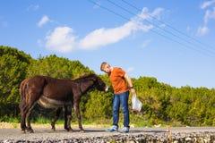 Équipez la caresse et alimentez les ânes sauvages Image libre de droits