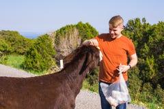 Équipez la caresse et alimentez un âne sauvage Photos libres de droits