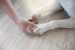Équipez la jambe du ` s de main et de chien du ` s Photos stock
