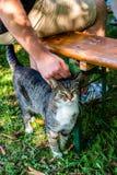Équipez la main choyant un chef de chat, chat est satisfait avec la course de main Amour aux animaux Photo libre de droits