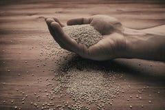 Équipez la main du ` s chargeant beaucoup de graines de quinoa photographie stock