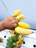 Équipez la main du ` s tenant quelques bananes mûres Photos libres de droits