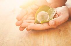 équipez la main tenant le petit globe de la terre et la feuille verte, concept de jour de terre concpet de donner et de santé Images libres de droits