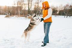 Équipez la marche avec l'horaire d'hiver de chien avec la neige dans l'amitié de Malamute de forêt Image libre de droits