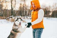 Équipez la marche avec l'horaire d'hiver de chien avec la neige dans l'amitié de Malamute de forêt Images libres de droits
