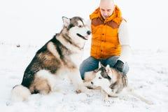 Équipez la marche avec l'horaire d'hiver de chien avec la neige dans l'amitié de Malamute et de chiens de traîneau de forêt Images libres de droits