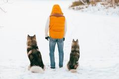 Équipez la marche avec l'horaire d'hiver de chien avec la neige dans l'amitié de Malamute et de chiens de traîneau de forêt Photo libre de droits