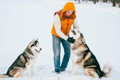 Équipez la marche avec l'horaire d'hiver de chien avec la neige dans l'amitié de Malamute et de chiens de traîneau de forêt Image stock