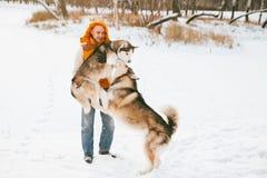 Équipez la marche avec l'horaire d'hiver de chien avec la neige dans l'amitié de Malamute et de chiens de traîneau de forêt Photos libres de droits