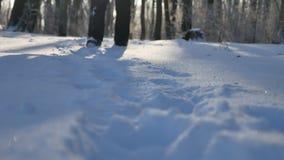 Équipez la marche dans paysage de nature de forêt d'hiver de neige le beau banque de vidéos