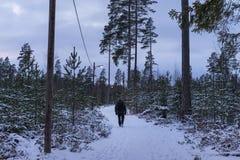 Équipez la marche dehors à l'hiver dans la forêt suédoise Photographie stock