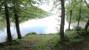 Équipez la marche par la forêt d'arbre au lac banque de vidéos
