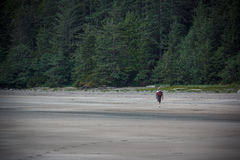 Équipez la plage de marche chez San Josef Bay près du port robuste, les Anglais Colu Photographie stock libre de droits