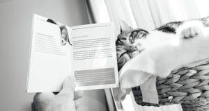Équipez la préparation pour voyager avec la brochure de lecture de chat de Switzerla Photos stock
