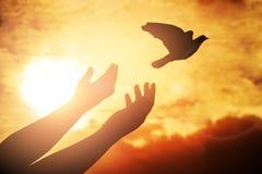 Équipez la prière et libérez l'oiseau appréciant la nature sur le fond de coucher du soleil, Photographie stock libre de droits
