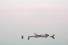 Équipez le flottement dans une eau vitreuse de mer morte photographie stock