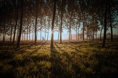 Équipez le fonctionnement sur une traînée dans la forêt Photographie stock