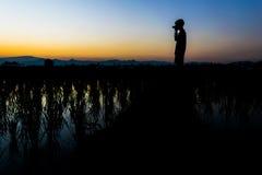 Équipez le support et prenez l'appareil-photo sur le gisement de riz Photographie stock libre de droits
